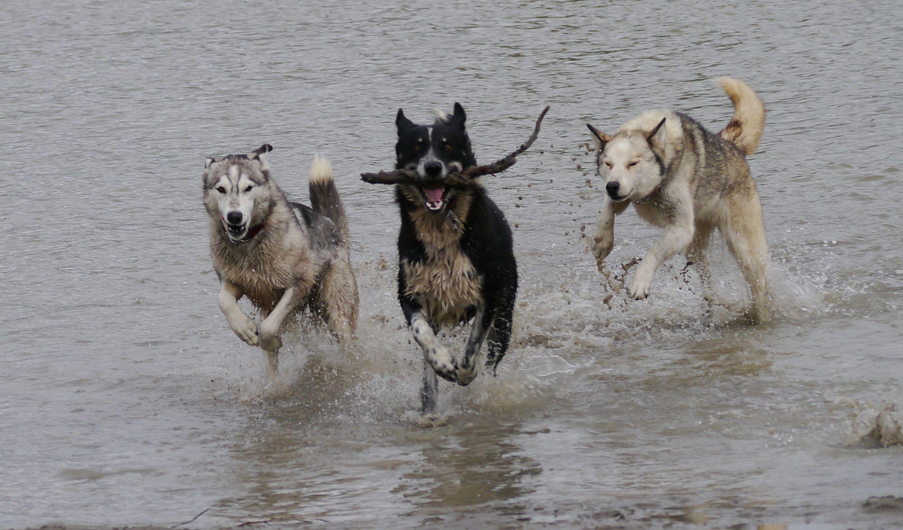 Daily River Fun