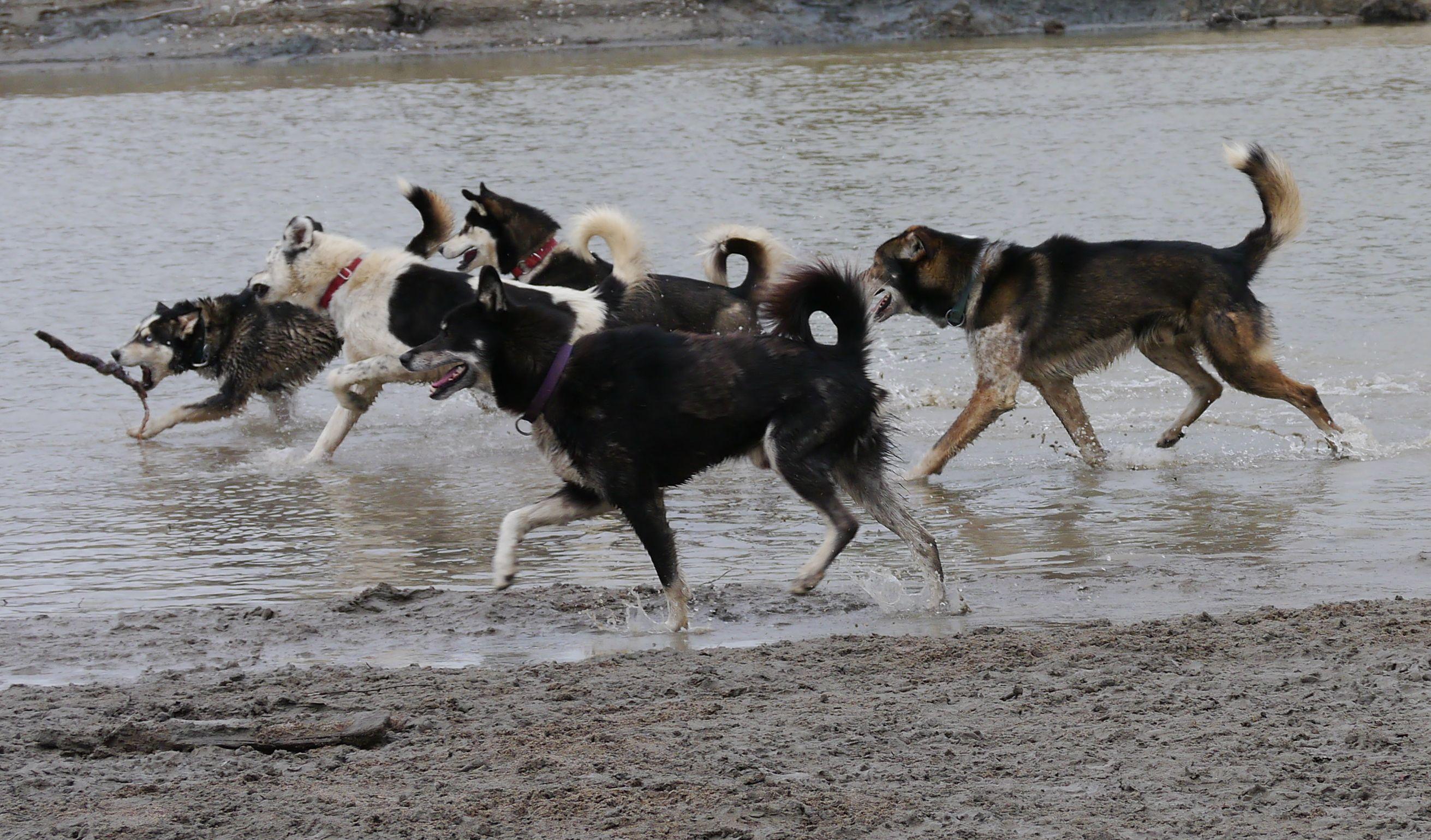 Takhini River play Time