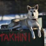 Takhini