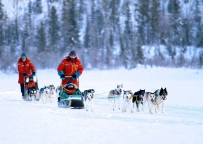 yukon-dog-mushing