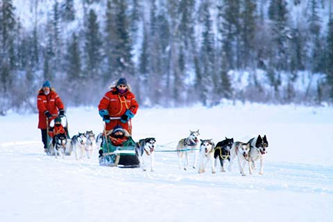 Dog Training Whitehorse