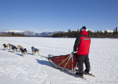 24493-dog-mushing-takhini-river-yukon