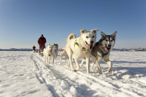 Yukon Dog Mushing