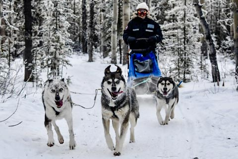 happy dogs pulling a sled with one person through a forest covered in snow