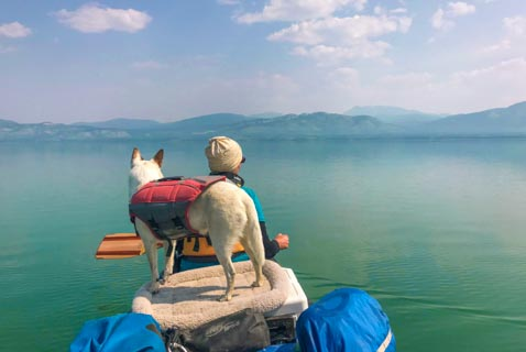 dog and person in canoe on lake