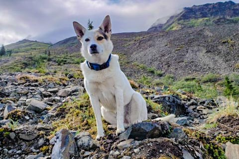dog sitting on rock during a hike in the alpine